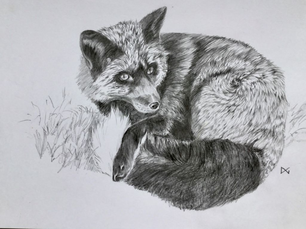 Black Fox by Doreen Gregson