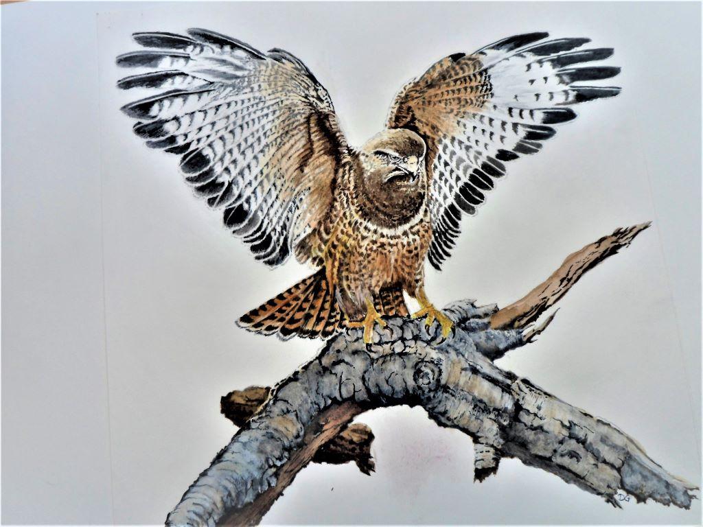 Buzzard Hawk by Dennis Griffiths