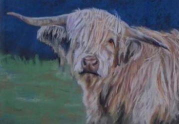 Highland Cow by Christine Dear