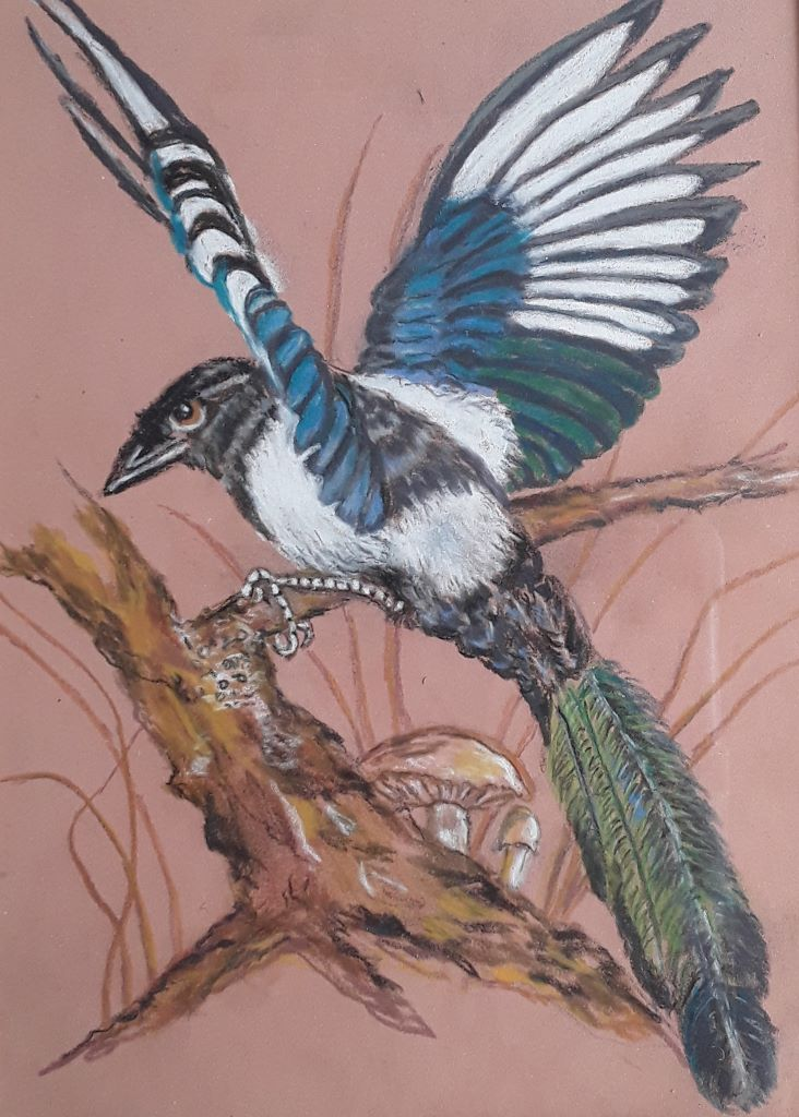 Magpie by Rosemary Wilkins