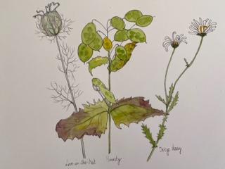 Plants sketch by Ros Croft