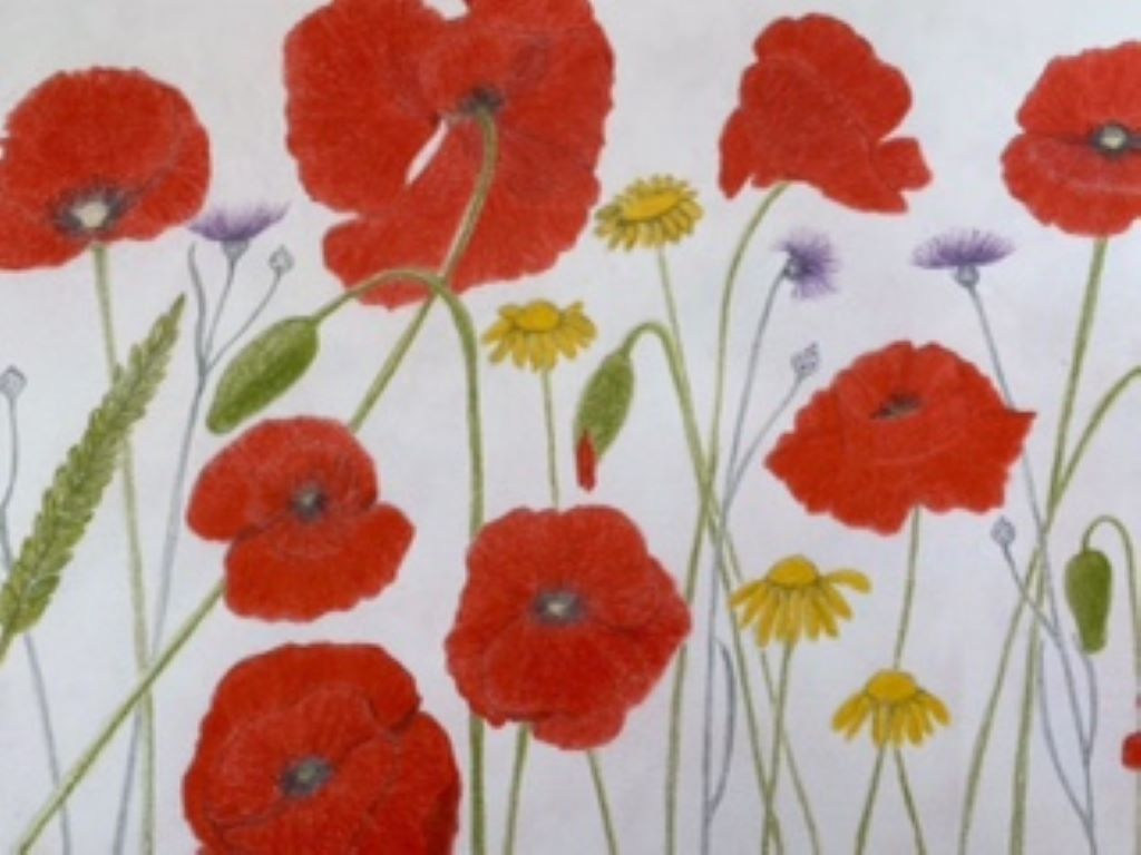 Poppies sketch by Ros Croft