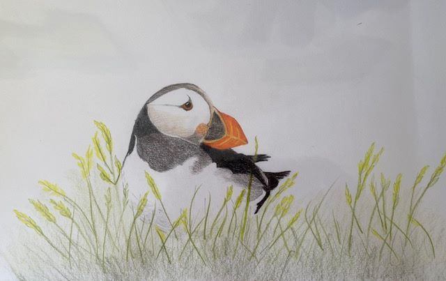Puffin by Ros Croft