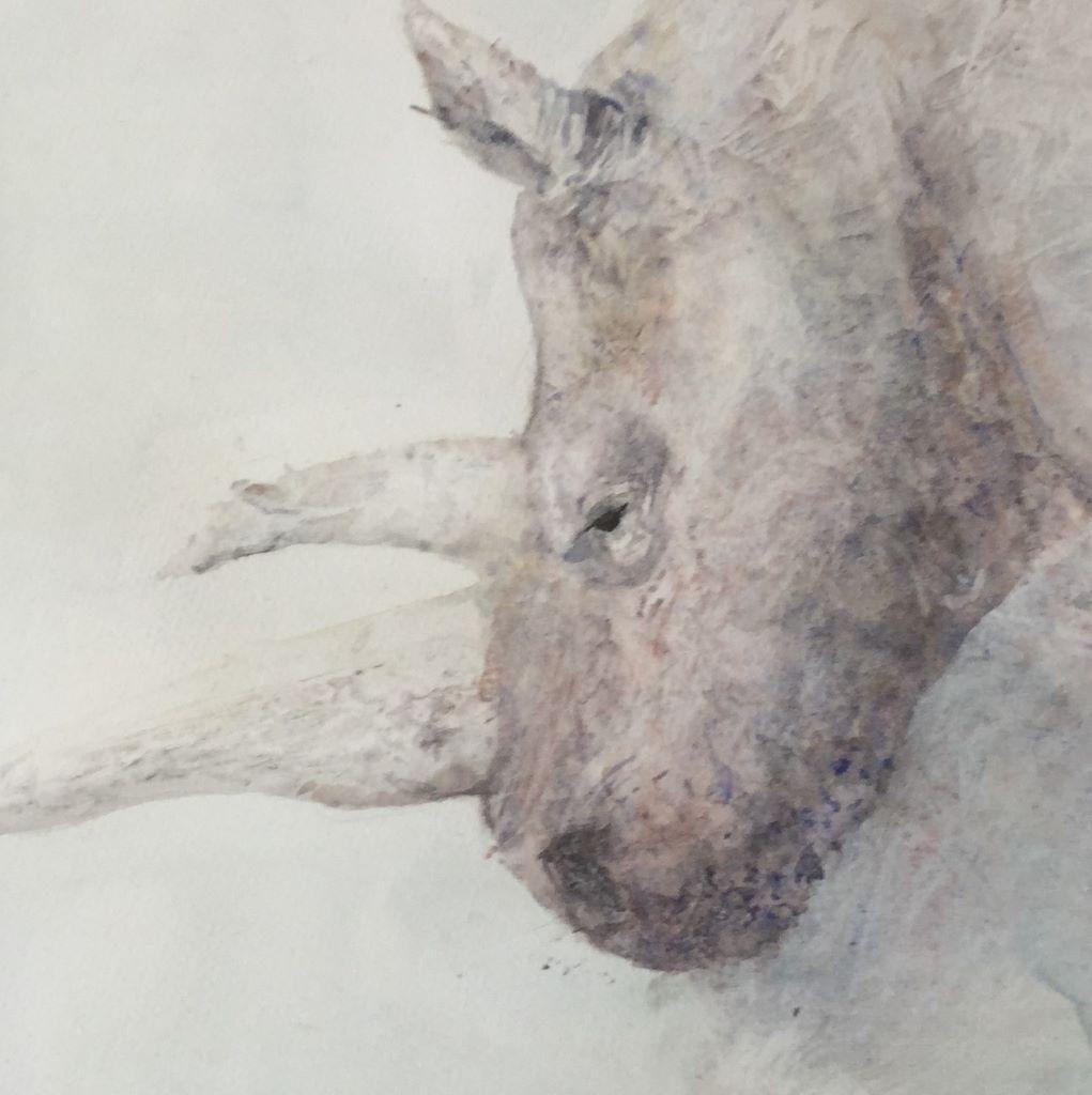Rhino by Susan Barton