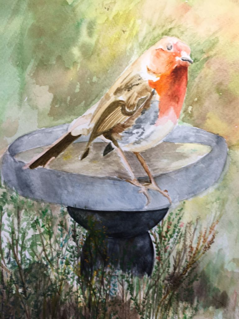 Robin, about to take a bird bath by Bharti Boyle