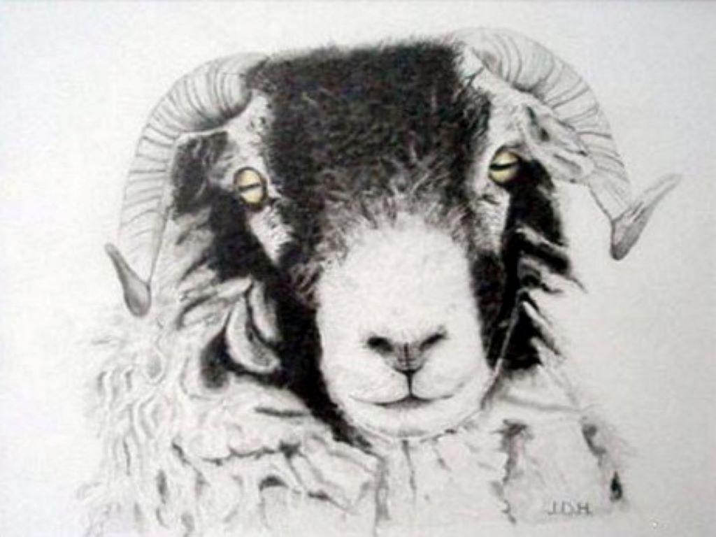 Swaledale Ram by John Hayston