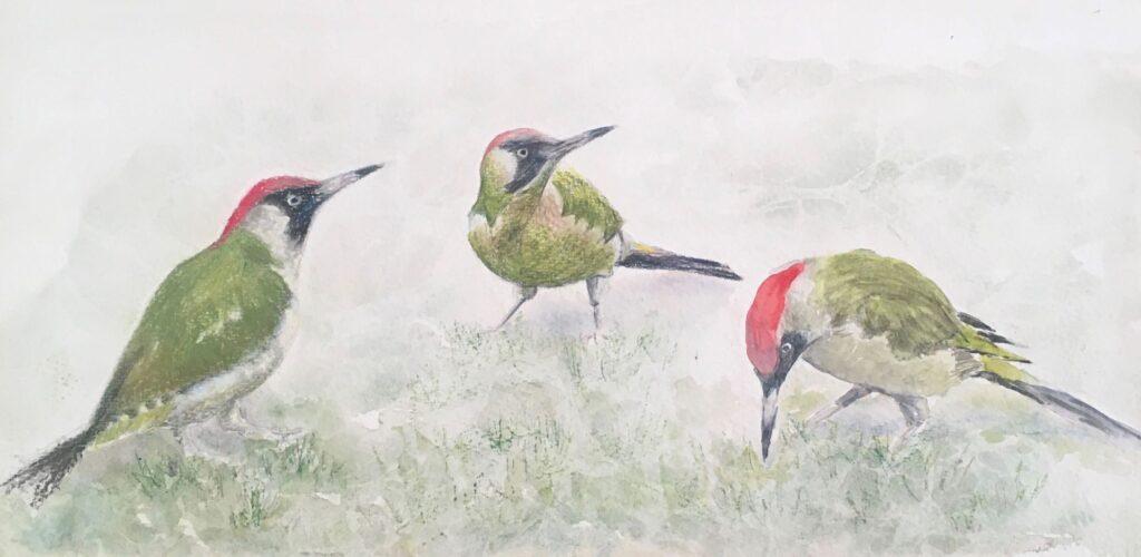 Woodpecker, Three Ways by Sue Page